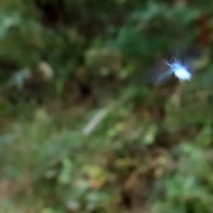 ユキムシ飛び始めた