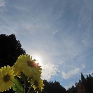 光学現象 ハロと幻日
