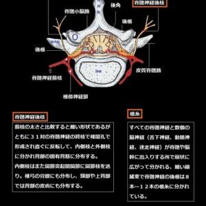 解剖学ノート編集委員会