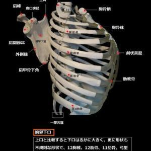 参考文献 解剖学「全般」 河野邦雄・伊藤隆造ほか 医・歯・薬出版