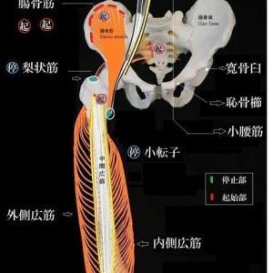 解剖学講座