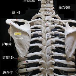 解剖学ノート編集
