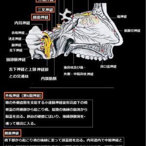 解剖学ノート
