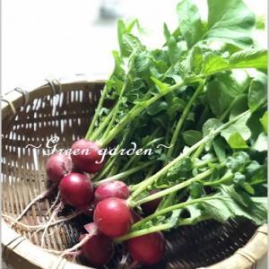 グリーンいっぱいの畑の野菜達♪おいしく頂きました!