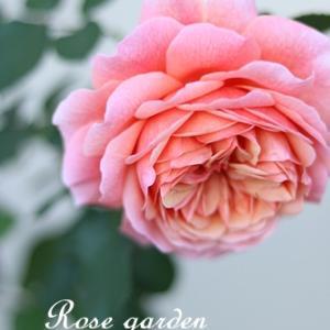 秋バラのこっくりとした色合いの魅力♡