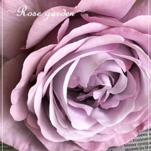 最後に咲いてくれた大輪のバラ