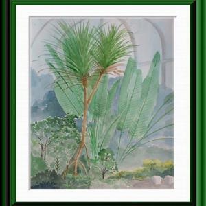 熱帯植物園の樹々を描く