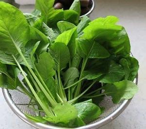 小松菜を採取