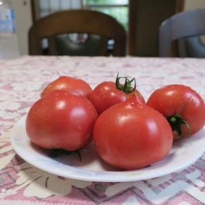 令和のトマト収穫第一号