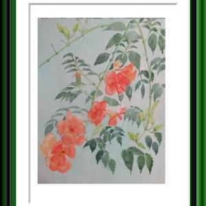 夏の花「ノウゼンカズラ」を描く