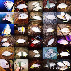 メッキ釣り初心者が2019年秋に100匹以上釣って感じたこと