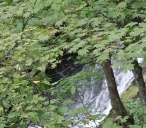 奥日光名瀑の一つ竜頭の滝と宿の温泉