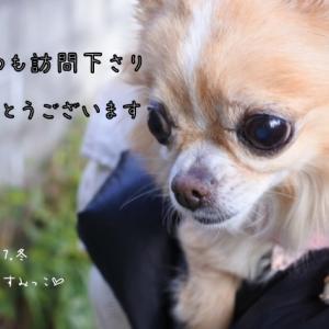 *東京のすみっこ* 暖かくなる予報。