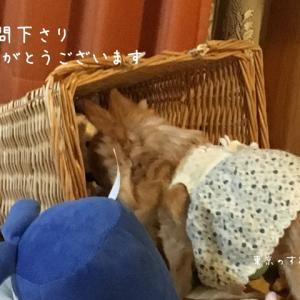 青空だけど今夜から?雪降るかも予報〜  の東京のすみっこ。