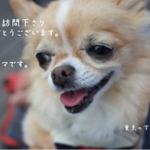今日は大寒。