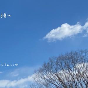 強風の東京のすみっこ