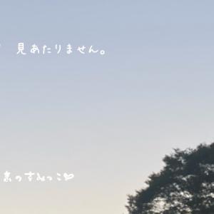 秋晴れ予報の東京のすみっこ。