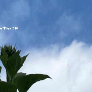 夏代表の花といったら 向日葵?