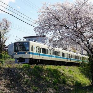 桜と小田急線 2019年