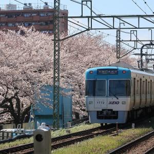 桜と京王井の頭線 2019年