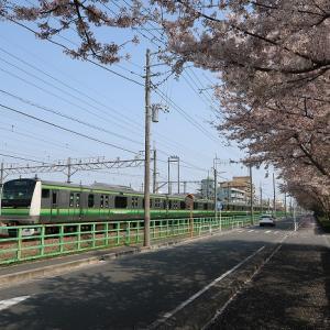 桜と横浜線 2019年