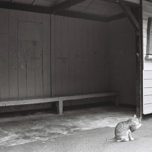ねこ付き 白丸駅 青梅線 1988年8月