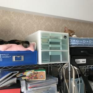 ◆チャシロ君 先住猫とお近づきに!?
