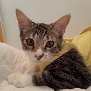 ◆里親様募集◆猫好きナッツくん!