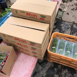 令和2年度の野菜出荷が始まりました!