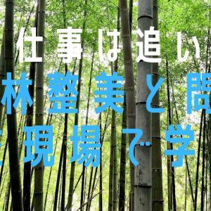 竹林を整備するメリットと竹を仕事にする難しさ