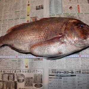 タイ釣り日記