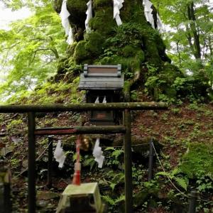 熊野皇大神社 しなの木神社 飛び出す御朱印