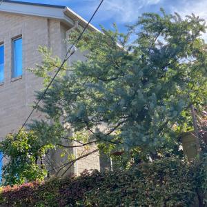 青い空に大きな樹木