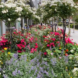 お庭とガーデンネックレス横浜の新作の苗、切り花の展示