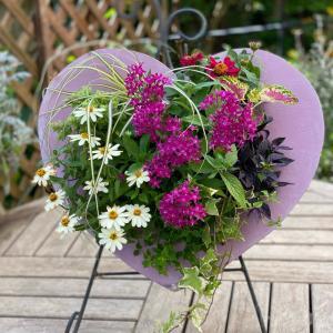 夏の寄せ植えや花壇のメンテナンス