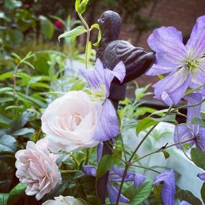 お花の少ないお庭にプリンスチャールズが咲いています