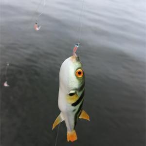 【魚嫌い克服必至】初心者でも大丈夫!ママと子どもだけで海釣りに。