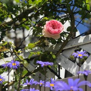 プチガーデニング 今日のお花