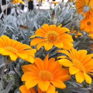 今日のお花(雨上がり後)