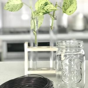観葉植物、増えてます!