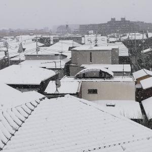 コロナの最中に、春の大雪です。