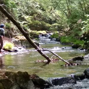 暑熱の千曲川水系釣行記。令和における初釣りはケチョンケチョンにされたこと。