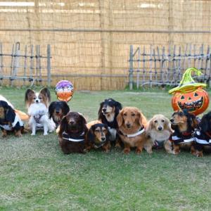 かぼちゃがいっぱいや