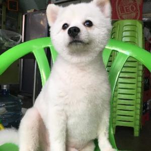 """""""【タイの注文食堂】番犬マル"""" 当ブログでは異例の3回目の登場です 笑"""
