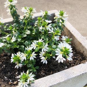新しい花とユーカリを植えました♬