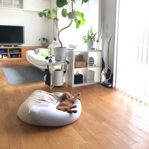 お気に入りの癒される光景♡ リビングと犬編。