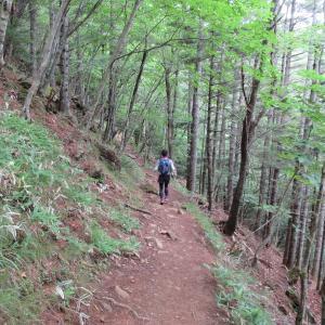 「アポイ岳」大型犬と登山(ウソ、旦那さんです)