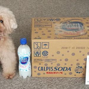 【当選品】 カルピスソーダ 1ケース(PET500ml 24本) アサヒ飲料