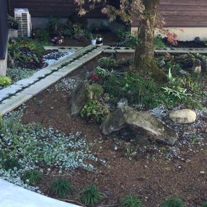 北の庭をちょっと拡大。クリスマスローズを植える。