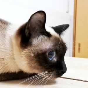 トイボブの猫ちゃん & 子猫ちゃん